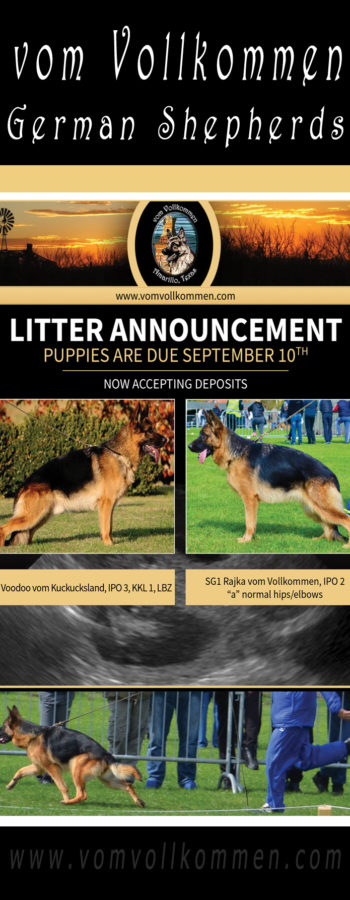 "Litter Announcement - Dam: SG1 Rajka vom Vollkommen IPO2 ""a"" normal hips/elbows, Sire: V1 Voodoo vom Kuckucksland IPO3 KKL1 LBZ.  We are now accepting deposits!"